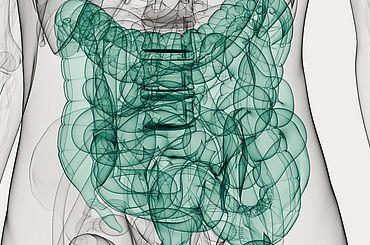 Illustration von einem Darm