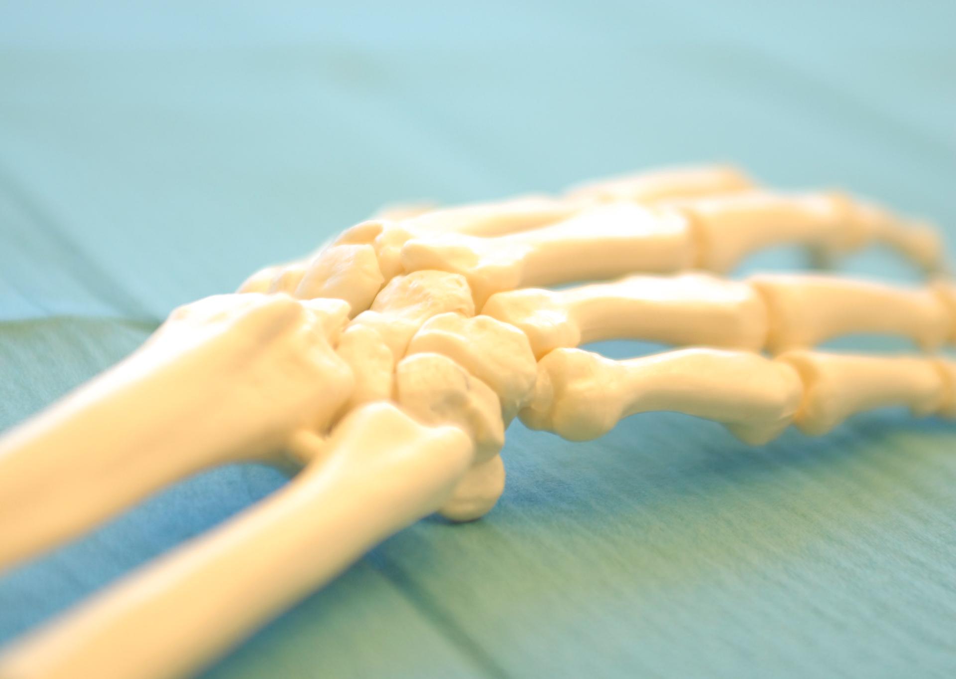Skelett von einer Hand