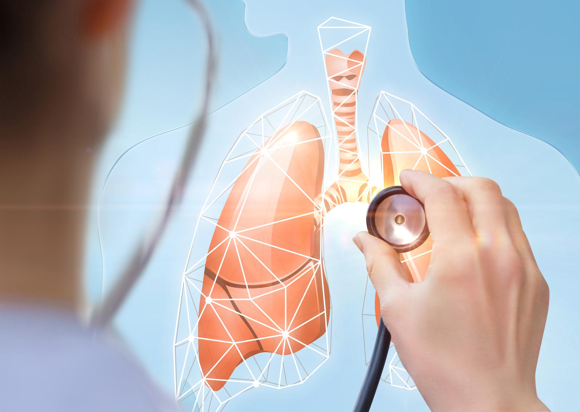 Arzt hört Lungenmodell mit einem Stethoskop ab
