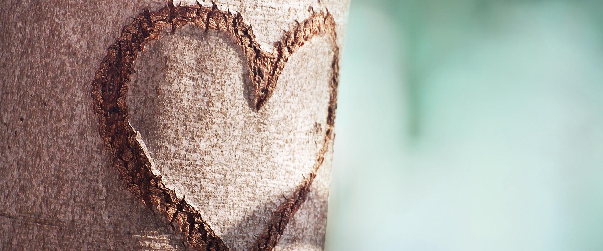Baum mit eingeritztem Herz